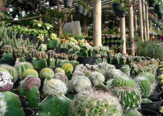 Agro Batu Luhur
