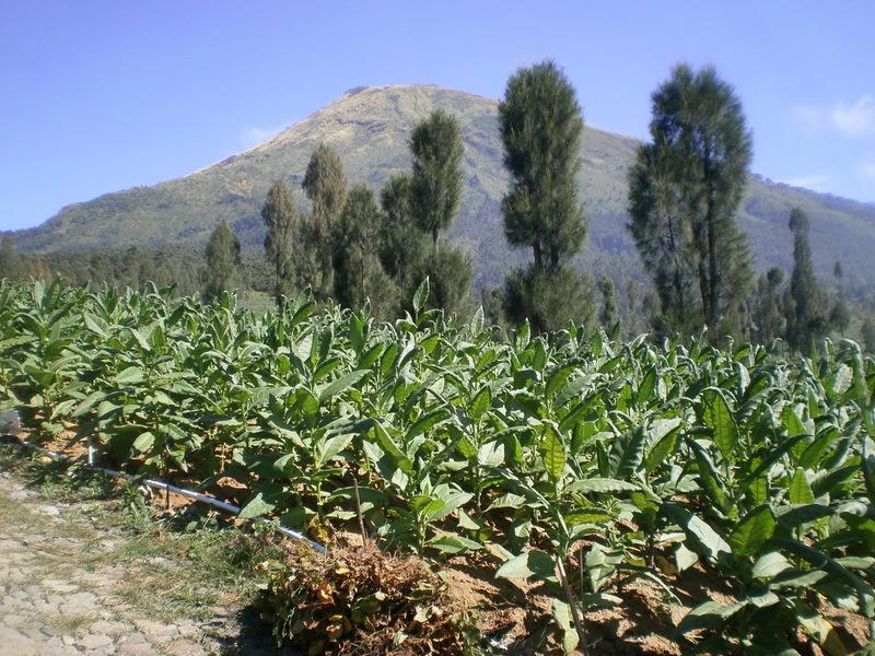 Tempat Wisata Desa Sitonjul