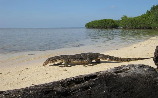 Pulau Biawak 3
